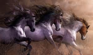 Horses Free Wild